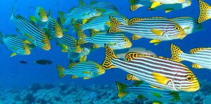 10 דברים שכדאי לדעת על ספארי צלילה במלדיביים