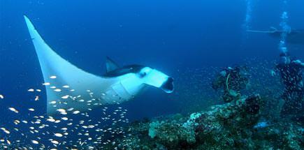 האיים המלדיביים: מפרץ האניפארו