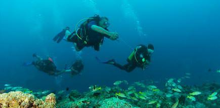ביטוח לספארי צלילה: כל מה שצריך לדעת