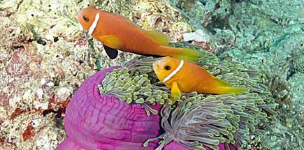 ספארי צלילה במלדיביים - גן עדן בגובה פני הים