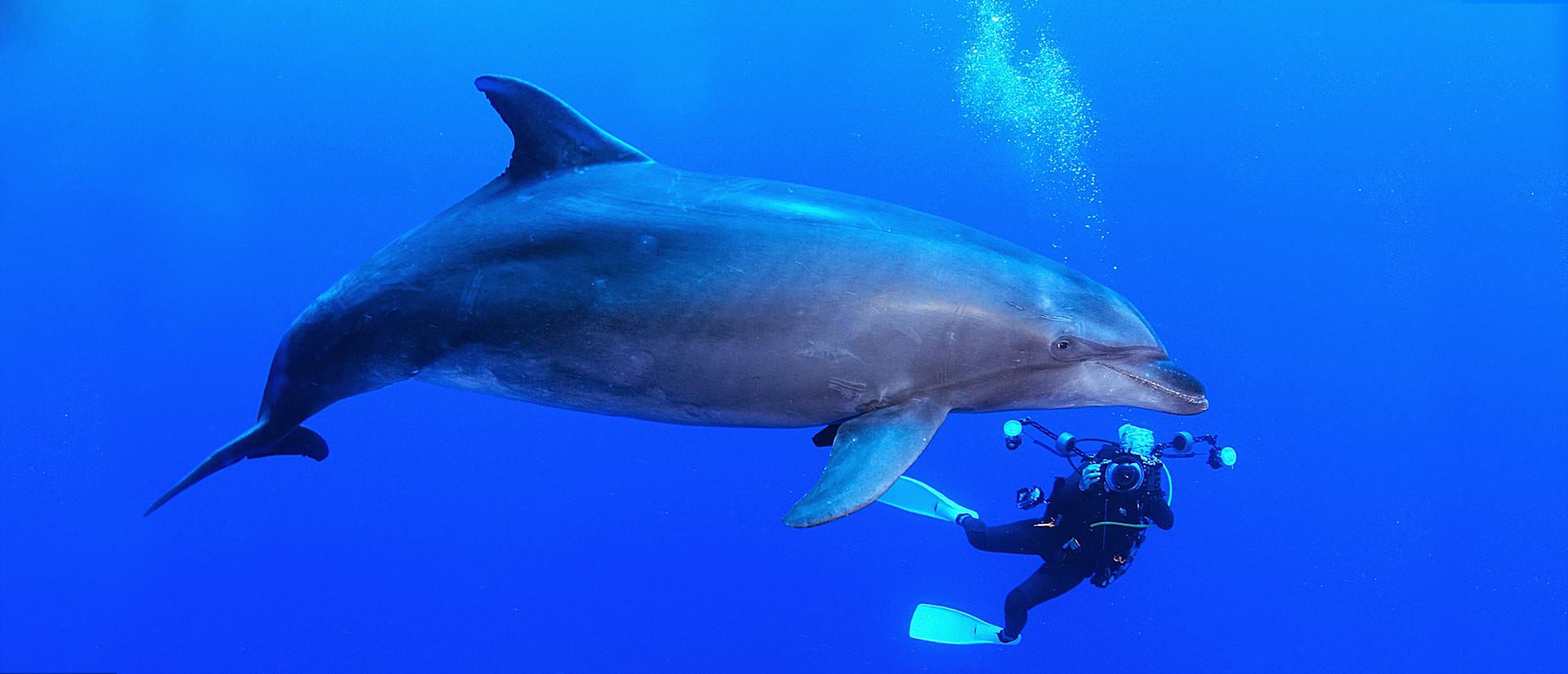ספארי צלילה בפולינזיה הצרפתית – 12 יום – מסע בלב האוקיינוס השקט