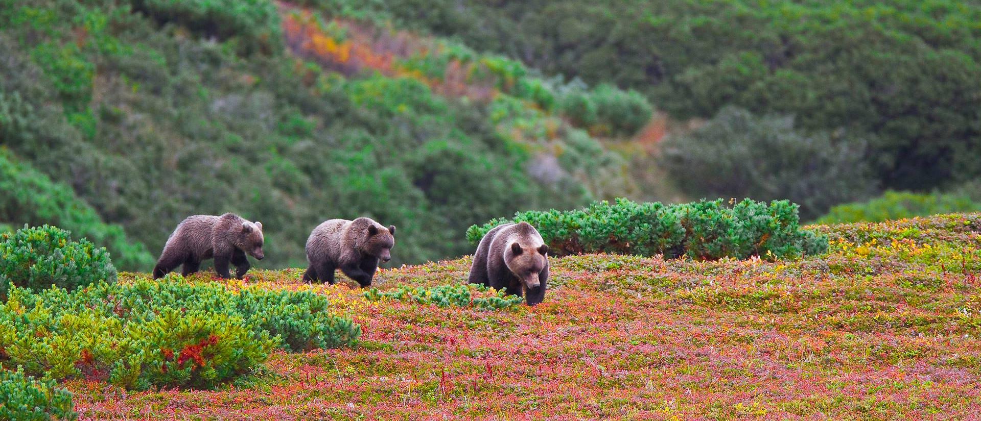 10 חוויות מרגשות מטיול בקמצ'טקה
