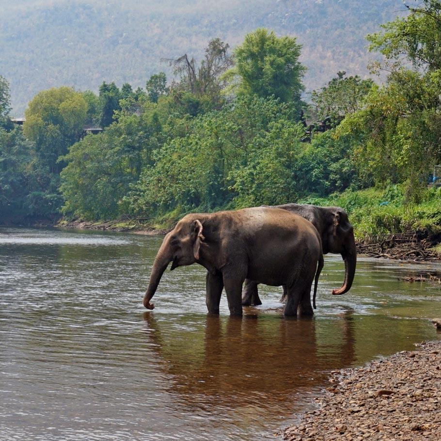 סמינר מטייל בלאוס - 13 יום - ''ממלכת מליון הפילים''