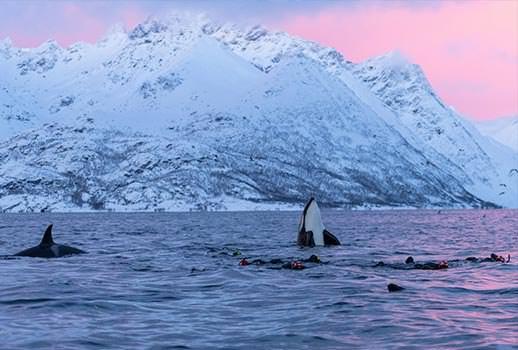 ספארי צלילה בנורבגיה - בעקבות לוויתנים קטנים