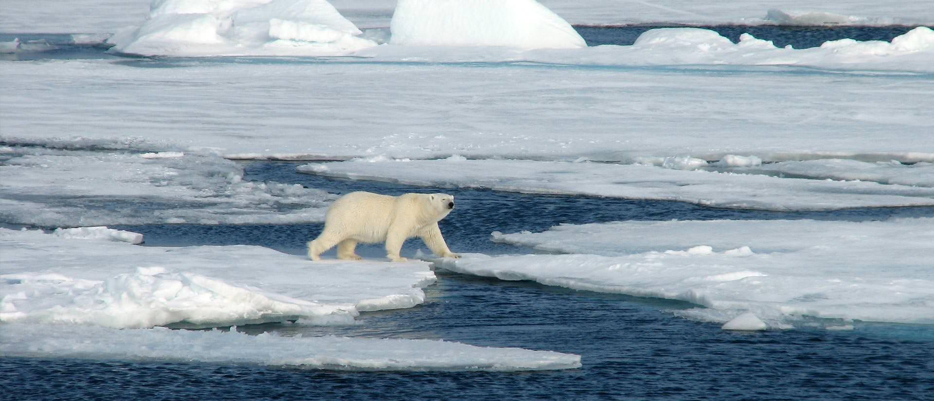 שפיצברגן - מסע ימי אל אי הדובים
