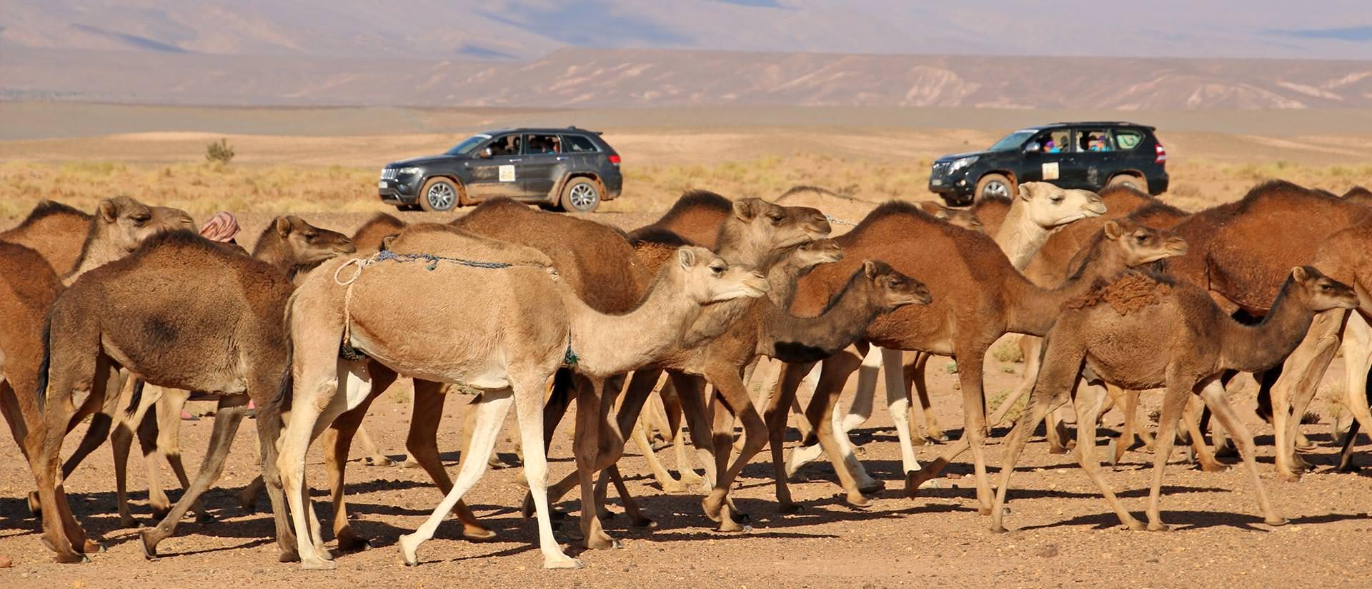 מלכת המדבר למרוקו