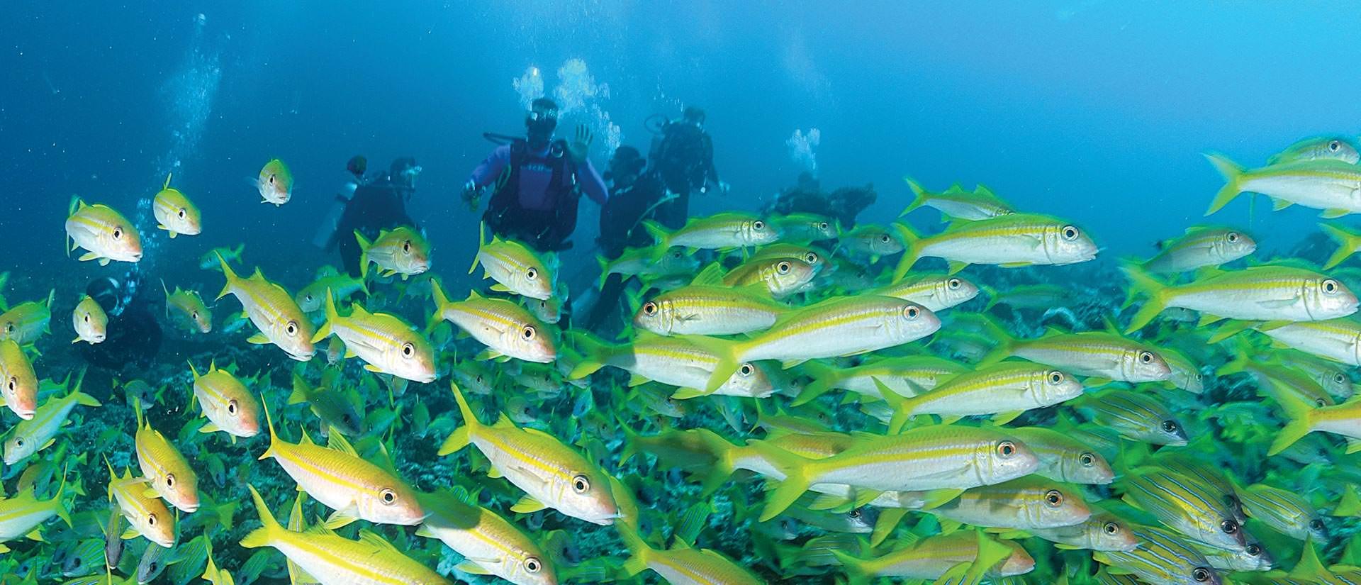 ספארי צלילה במלדיביים - 9 ימים - 'אוקטובר מלדיפסט' קרנבל במלדיביים
