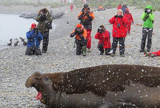 טיול שייט לאנטארקטיקה - פיל ים מדגמן לצלמים | צילום: אמיר גור