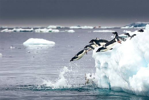 טיול שייט לאנטארקטיקה | צילום: Quark Expeditions