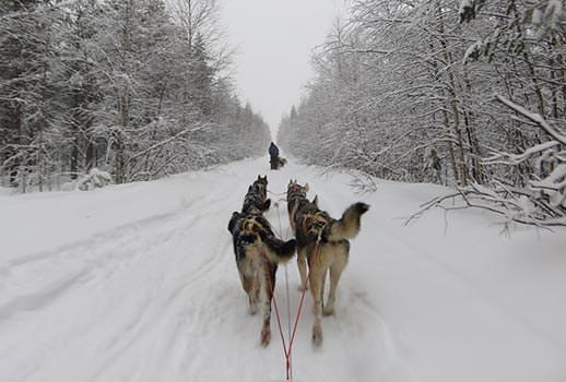 מזחלות כלבים, לפלנד | צילום: מוטי סבאג