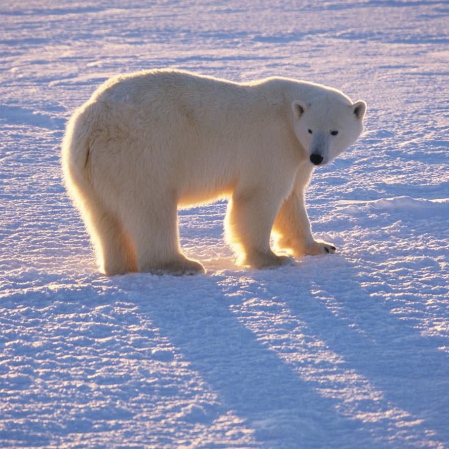 טיול לשפיצברגן - 7 ימים - אל ביתם של איילי צפון, ניבתנים ודובי קוטב