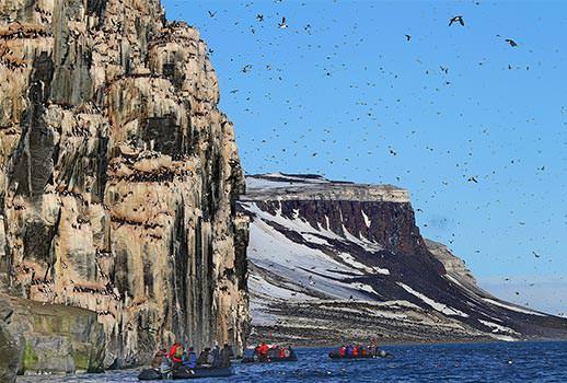 מושבות של עופות ים בשפיצברגן | צילום: מולה יפה
