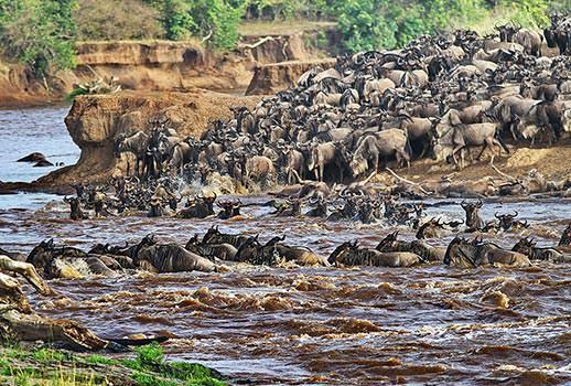 הנדידה הגדולה, ספארי בטנזניה | צילום: מולה יפה