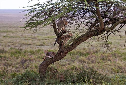 ספארי בטנזניה | צילום: בן לם, לנס הפקות