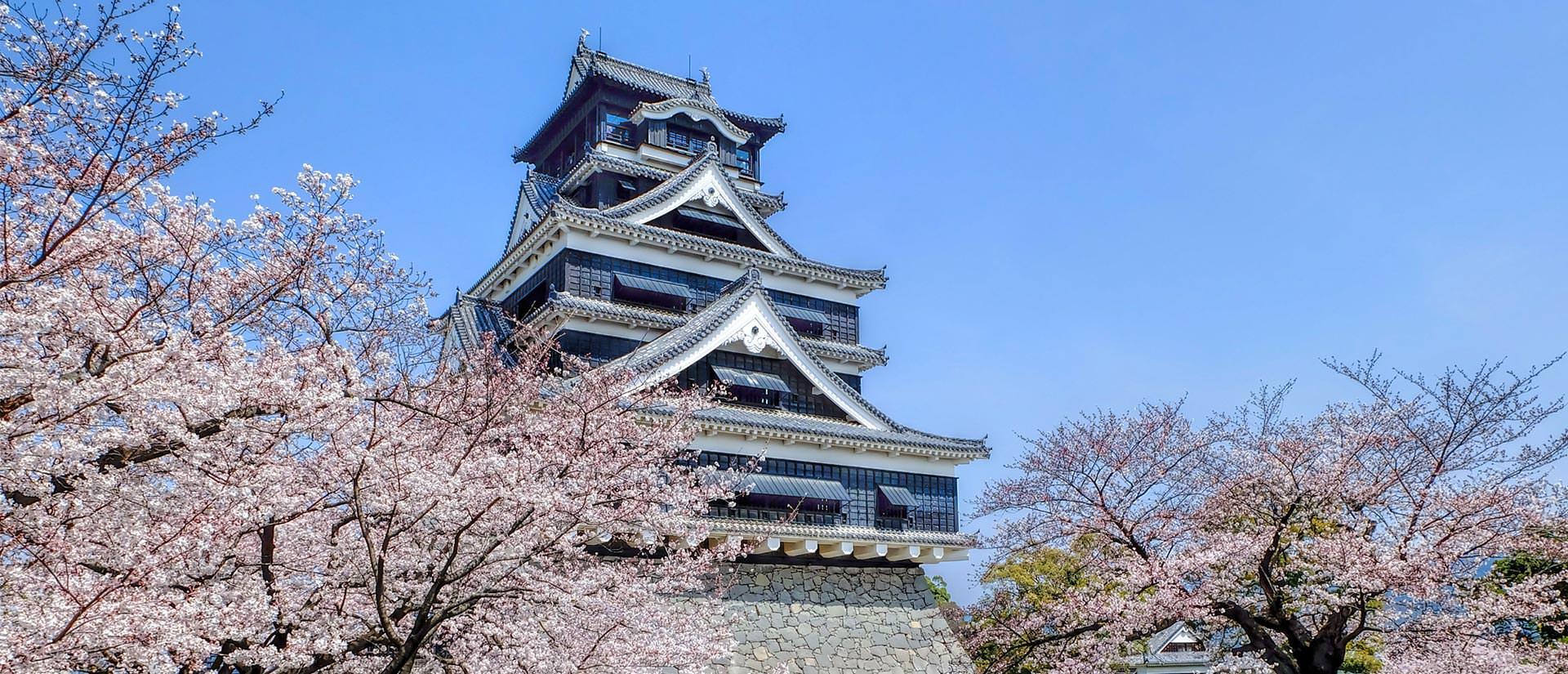 טיולים מאורגנים ליפן בפריחת הדובדבן