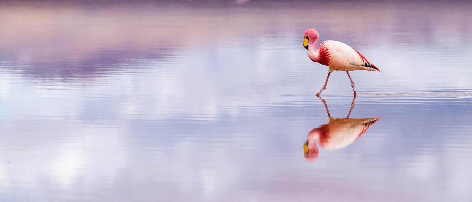 השתקפות מושלמת במדבר המלח של בוליביה