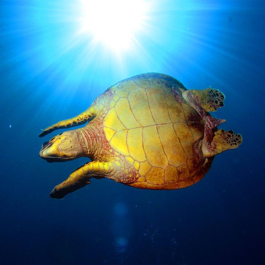 ספארי צלילה בסיני - 5 ימים - דהב ומצרי טיראן