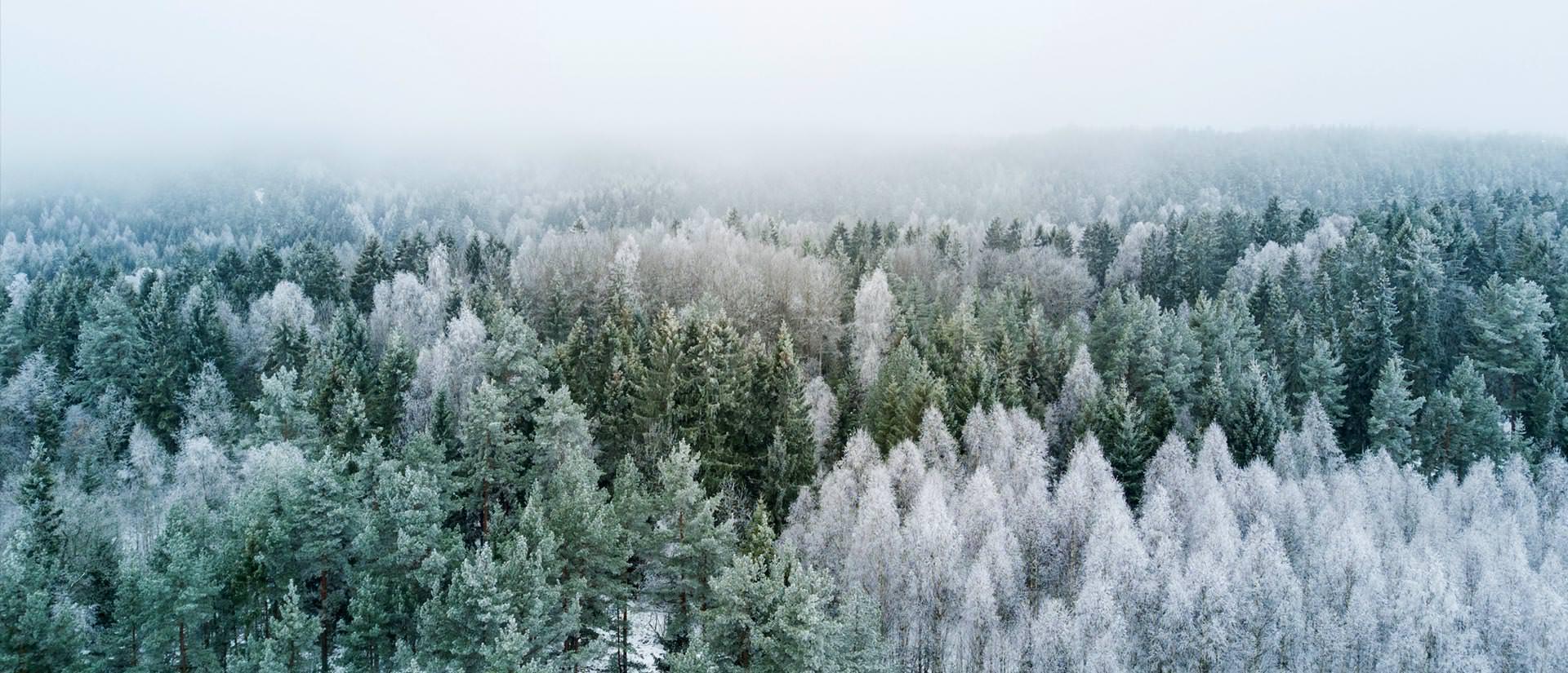 יער הטייגה – היער הגדול בעולם