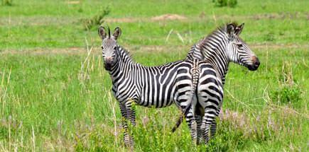 שמורות טבע בטיול ספארי בטנזניה