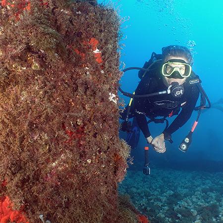 ''ספארי צפוני'' בים התיכון