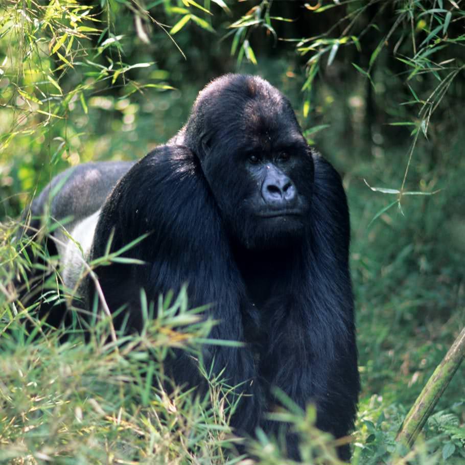 טיול לרואנדה - ארץ הגבעות הירוקות