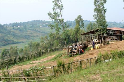נופי הגבעות הירוקות ברואנדה