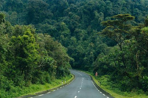 הרבה ירוק בפארק ניונגווה, רואנדה