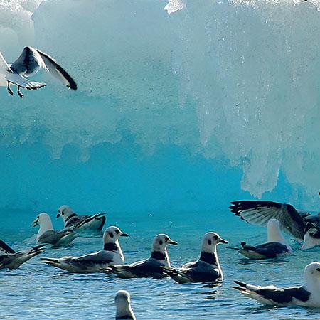 אל מערב גרינלנד - 9 ימים - שייט גיאוגרפי בין נופי הקרח היפים בעולם